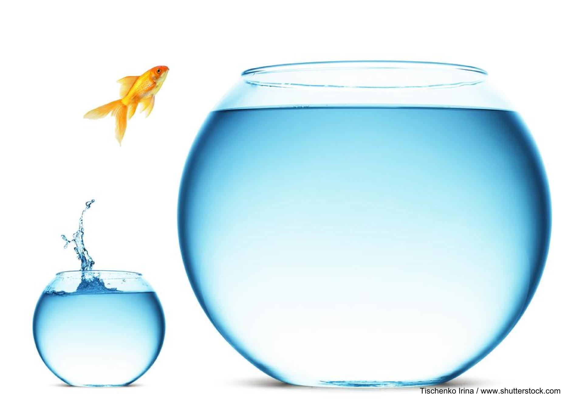 Nutzen Sie ein Coaching in der Potentialschmiede, um Ihre Potentiale zu entfalten.