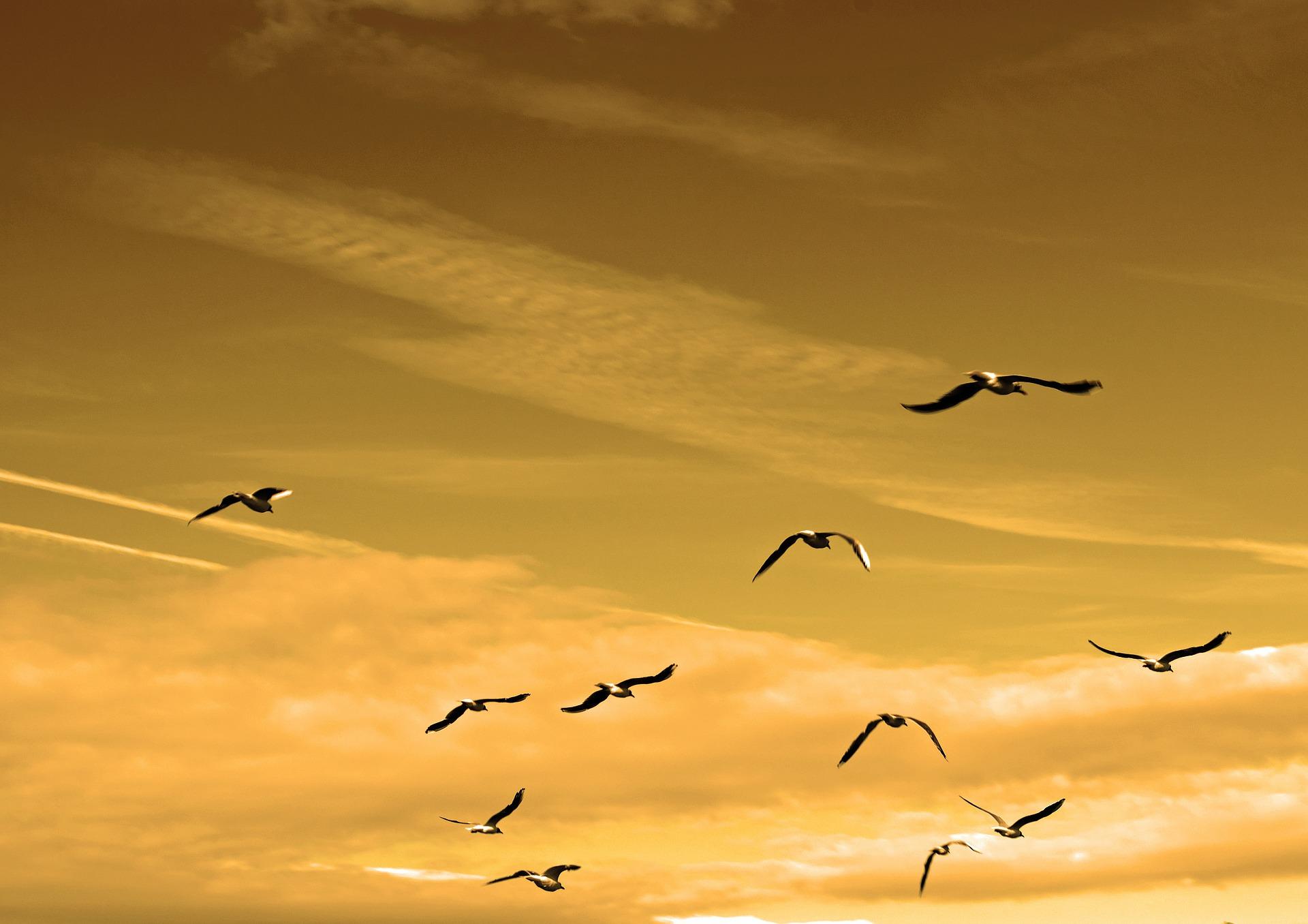 Himmel mit Vögeln