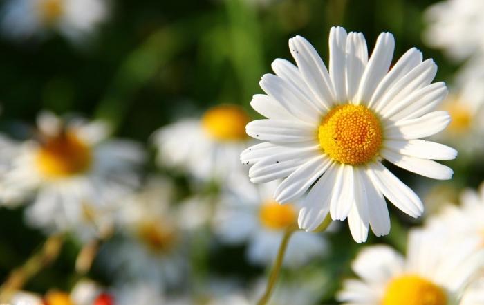 Mit emotionalem Selbstmanagement zu mehr Erfolg. © Optimusius1 | pixabay.com